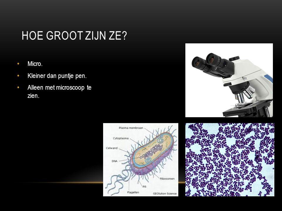 HOE GROOT ZIJN ZE? Micro. Kleiner dan puntje pen. Alleen met microscoop te zien.