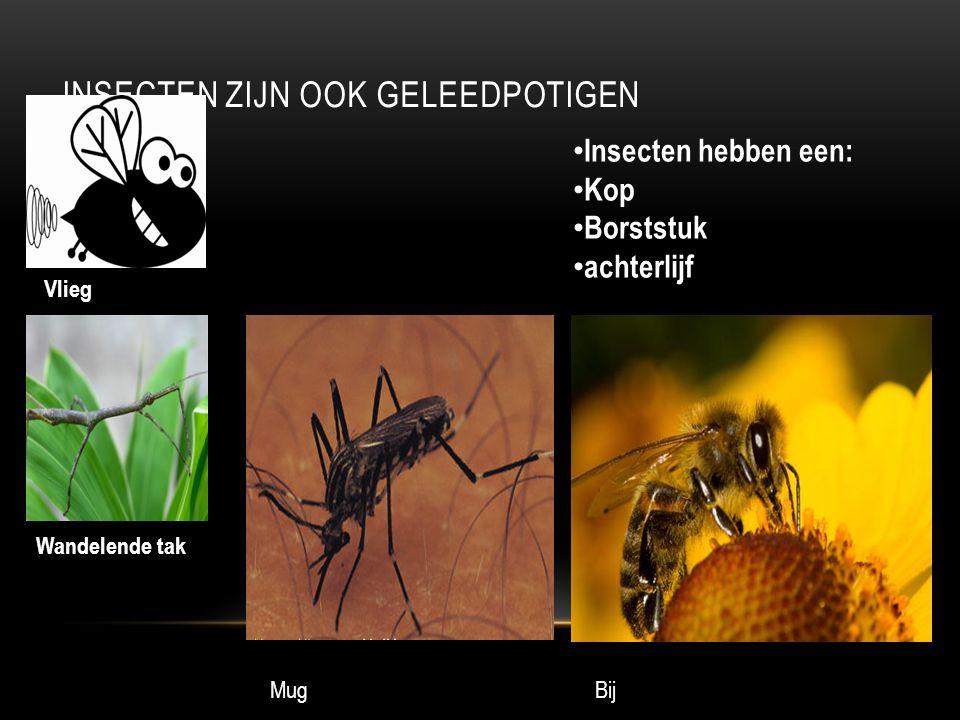 INSECTEN ZIJN OOK GELEEDPOTIGEN Vlieg Wandelende tak Insecten hebben een: Kop Borststuk achterlijf MugBij