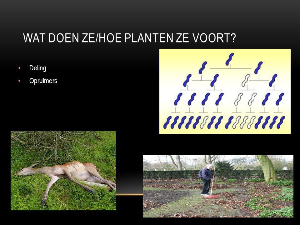 WORMEN Regenwormen Lintworm e.a wormen Hebben geen skelet Lichaam is lang en dun Leven in de grond
