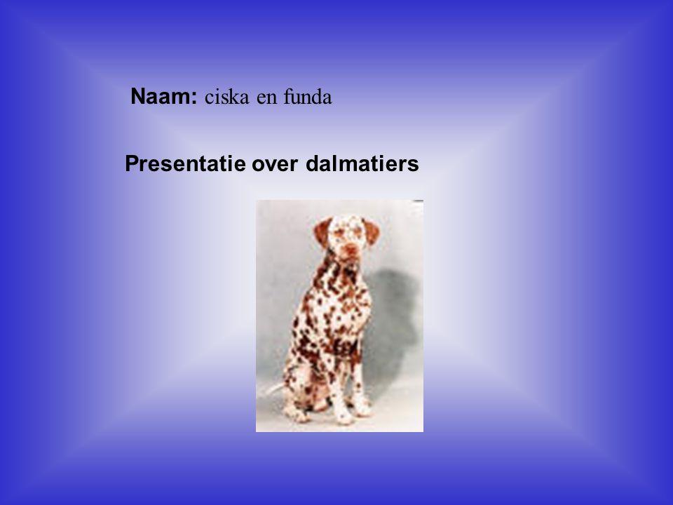 Naam: ciska en funda Presentatie over dalmatiers Klik op Naam .
