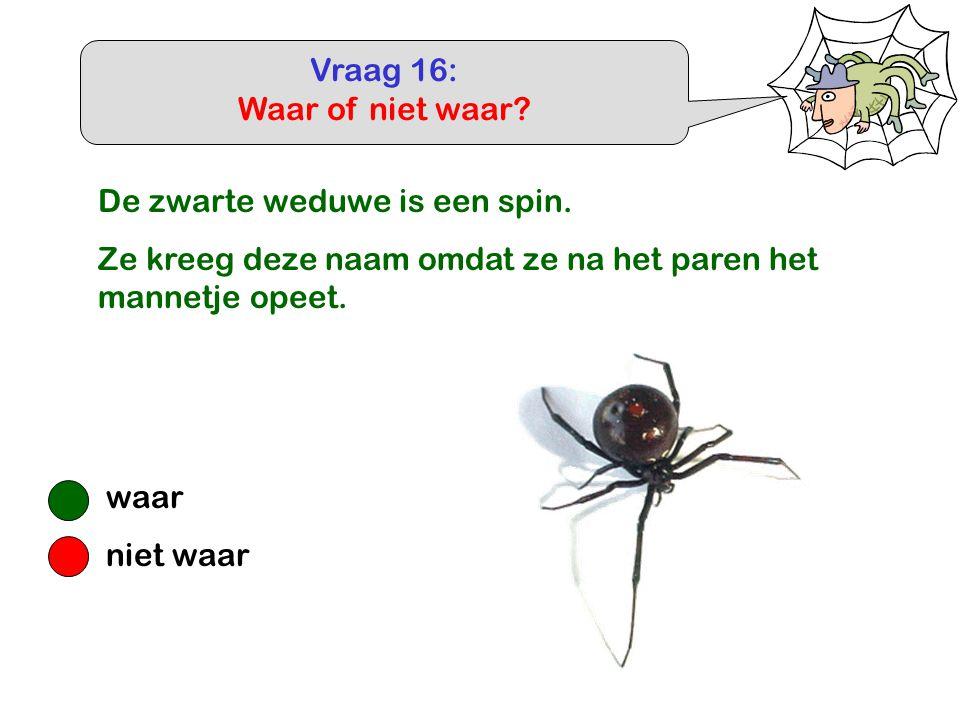 Vraag 16: Waar of niet waar? waar niet waar De zwarte weduwe is een spin. Ze kreeg deze naam omdat ze na het paren het mannetje opeet.