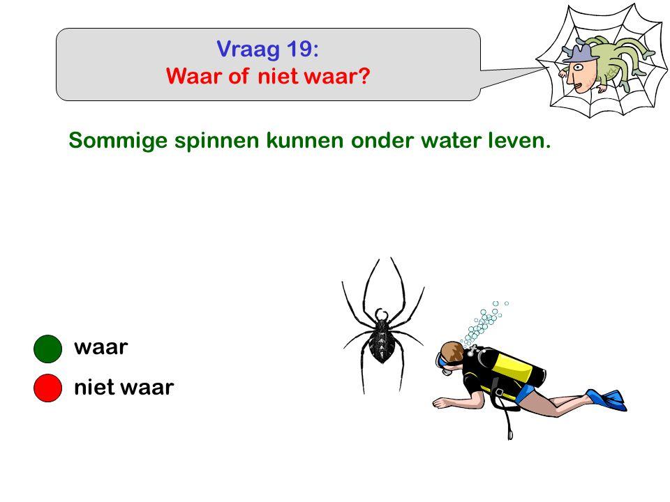 Vraag 19: Waar of niet waar? waar niet waar Sommige spinnen kunnen onder water leven.