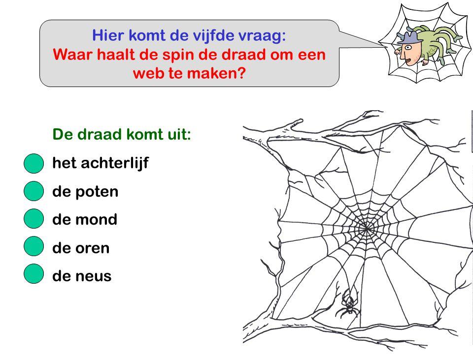 Hier komt de vijfde vraag: Waar haalt de spin de draad om een web te maken? De draad komt uit: het achterlijf de poten de mond de oren de neus