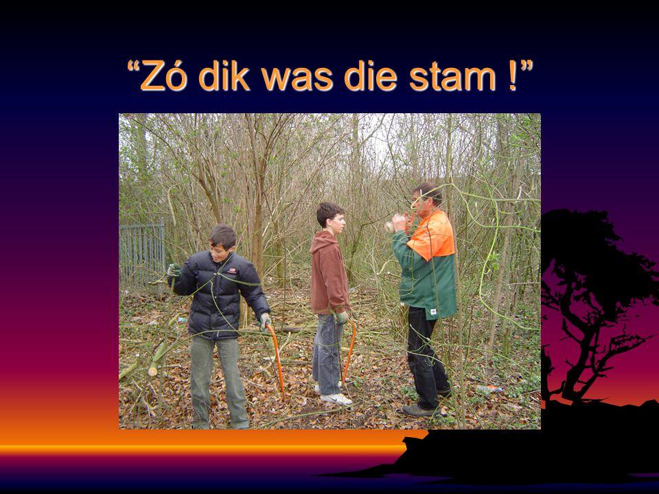 """""""Zó dik was die stam !"""""""