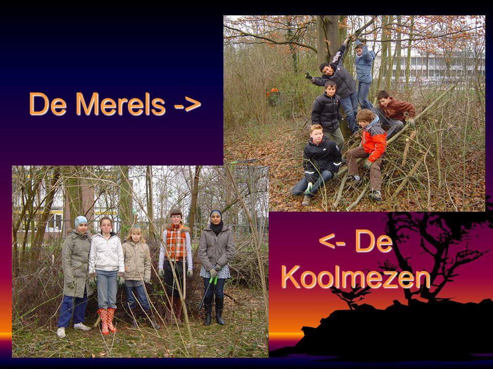 DeMerels-> De Merels -> <- De Koolmezen