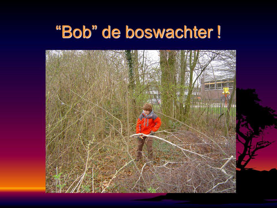Bob de boswachter !