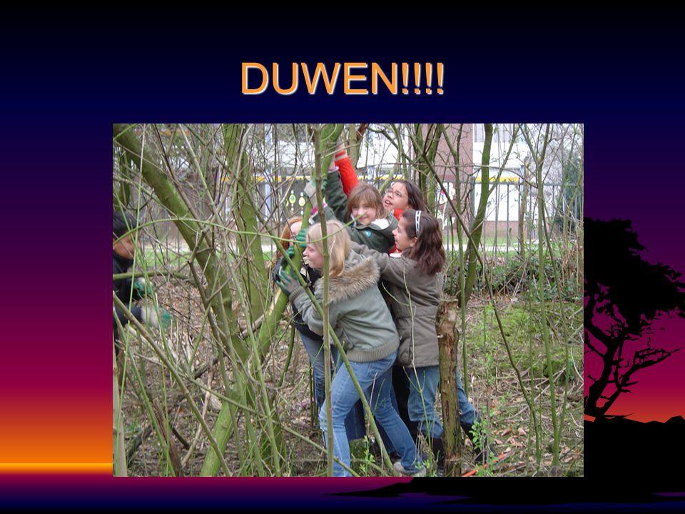 DUWEN!!!!