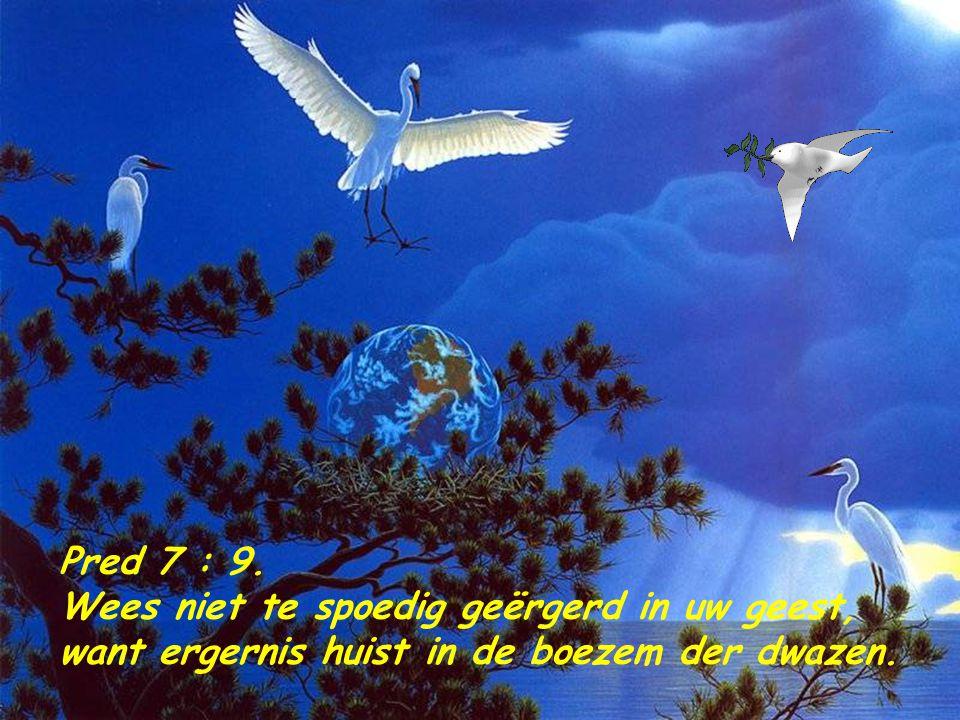 Pred 7 : 9. Wees niet te spoedig geërgerd in uw geest, want ergernis huist in de boezem der dwazen.