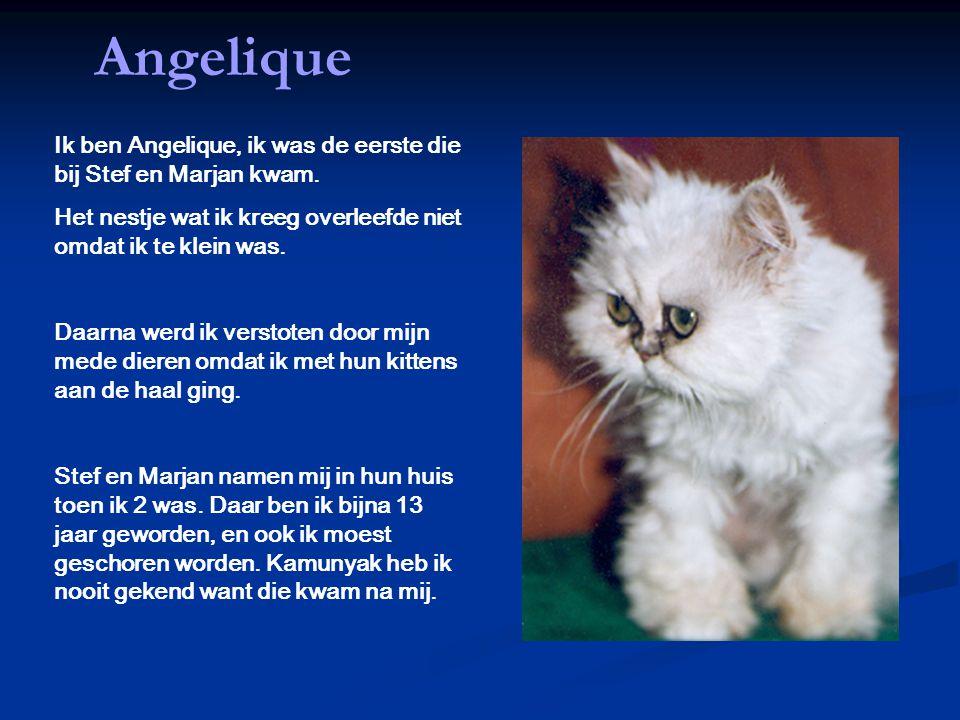 Angelique Ik ben Angelique, ik was de eerste die bij Stef en Marjan kwam. Het nestje wat ik kreeg overleefde niet omdat ik te klein was. Daarna werd i