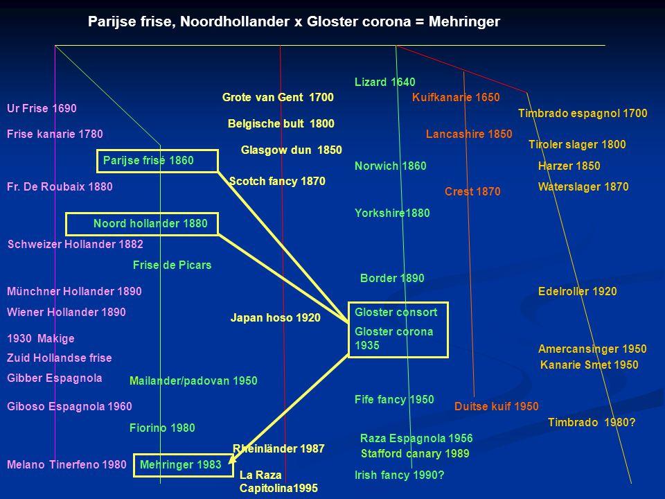 Klein gefriseerd ras: Mehringer 13 cm Duitsland 1983 De naam van dit ras is ontleend aan de woonplaats van de kweker. De geschiedenis van dit ras gaat