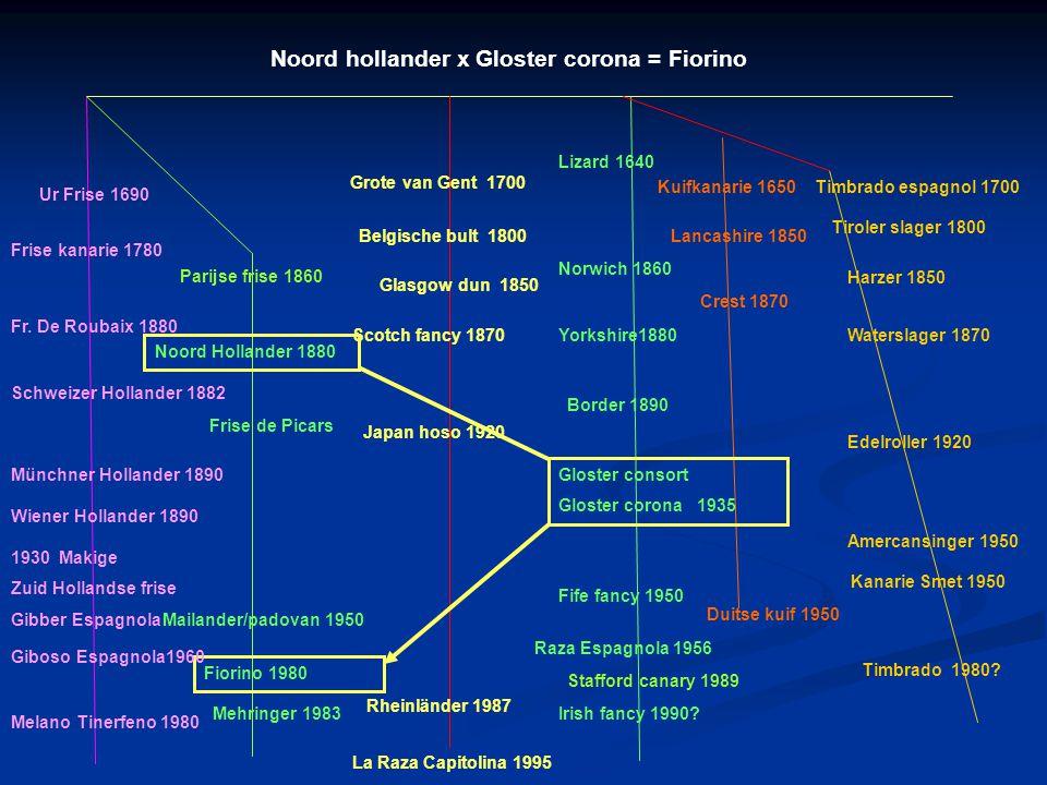 Klein gefriseerd ras : Fiorino 13 cm 1989 Italië Naamgeving van de vogel is ontleend aan de woonplaats van de kweker. Gekuifd en ongekuifd met opgeric
