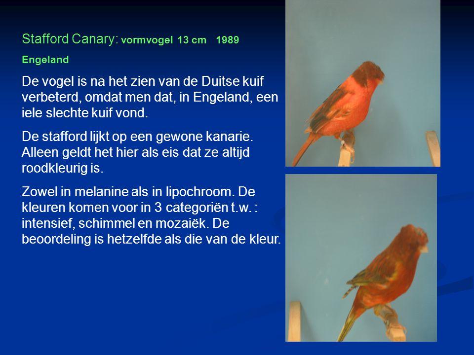 Lizard 1640 Wilde kanarie x huiskanarie = Lizard