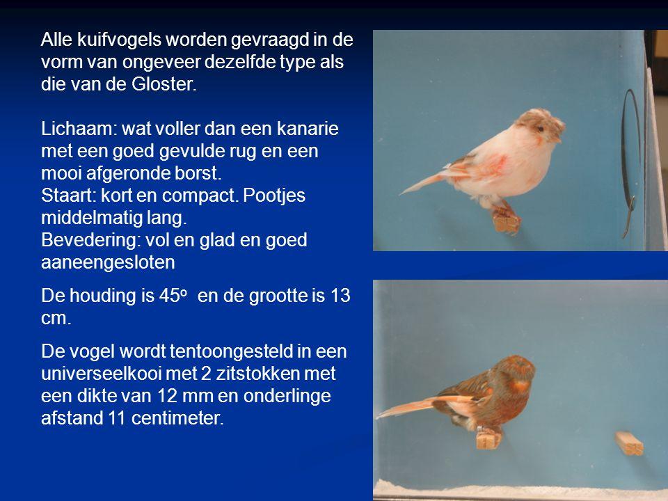 Stafford Canary: vormvogel 13 cm 1989 Engeland De vogel is na het zien van de Duitse kuif verbeterd, omdat men dat, in Engeland, een iele slechte kuif