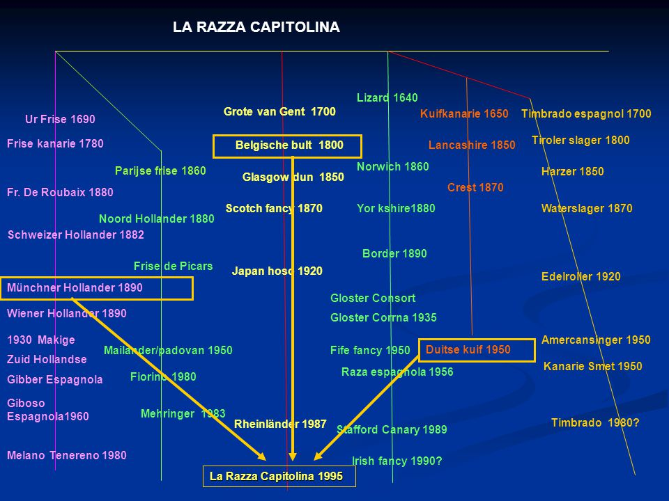 LA RAZZA CAPITOLINA: LA RAZZA CAPITOLINA: 1995 Mini Yorkshire - houdingvogel 12,5 – 13,5 CM. ItaliIë : Kwekers uit Rome en genoemd naar 1 van 7 heuvel