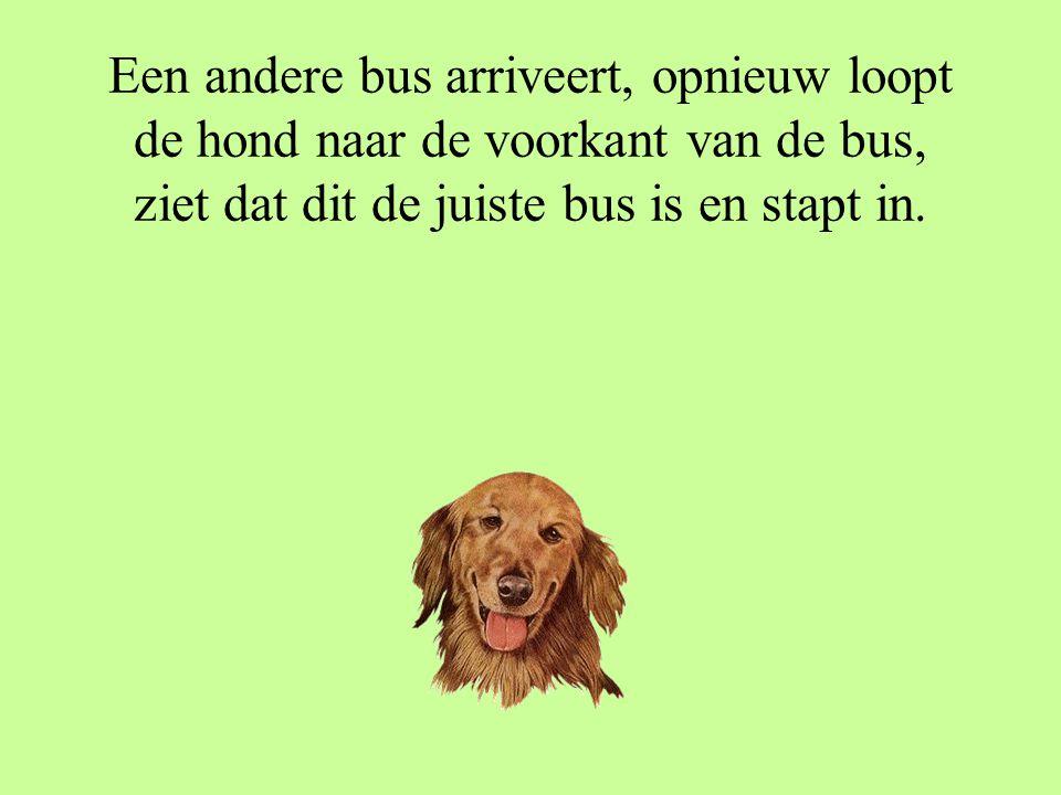 De bus arriveert, de hond loopt naar de voorkant van de bus, kijkt naar het lijnnummer en gaat terug op het bankje zitten.