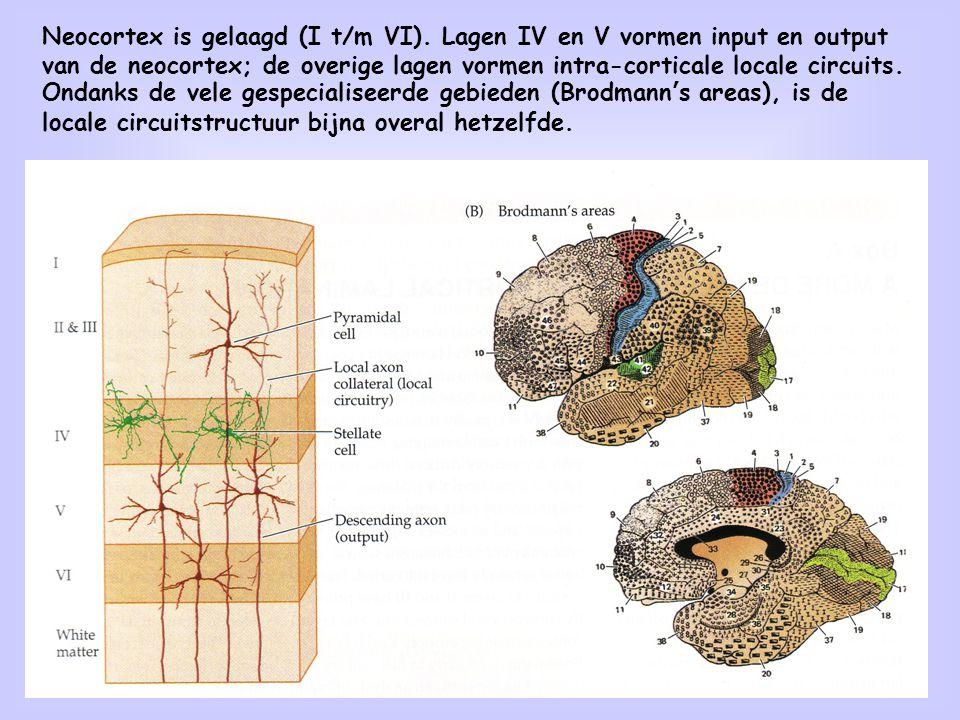 9 Neocortex is gelaagd (I t/m VI). Lagen IV en V vormen input en output van de neocortex; de overige lagen vormen intra-corticale locale circuits. Ond
