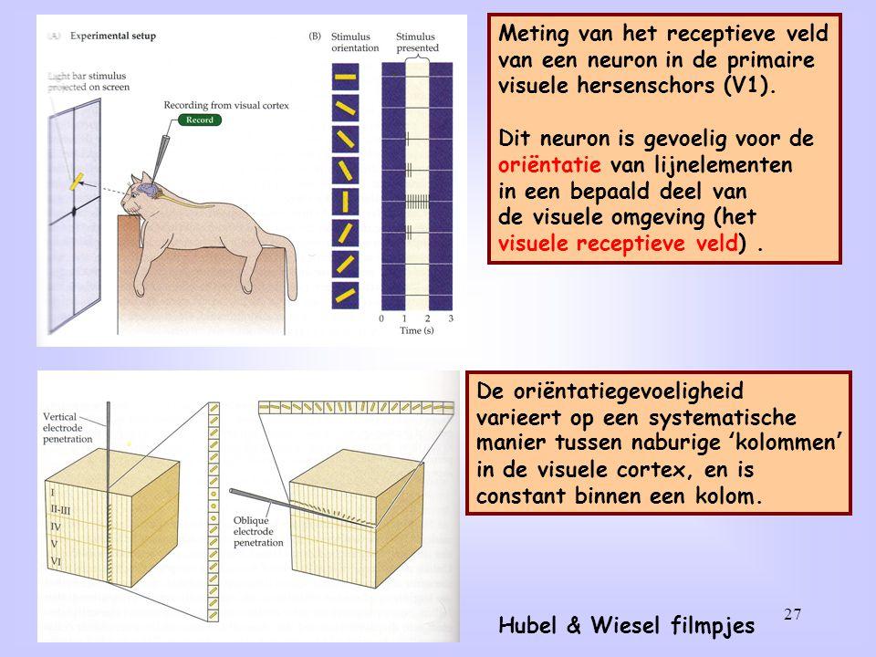 27 Meting van het receptieve veld van een neuron in de primaire visuele hersenschors (V1). Dit neuron is gevoelig voor de oriëntatie van lijnelementen