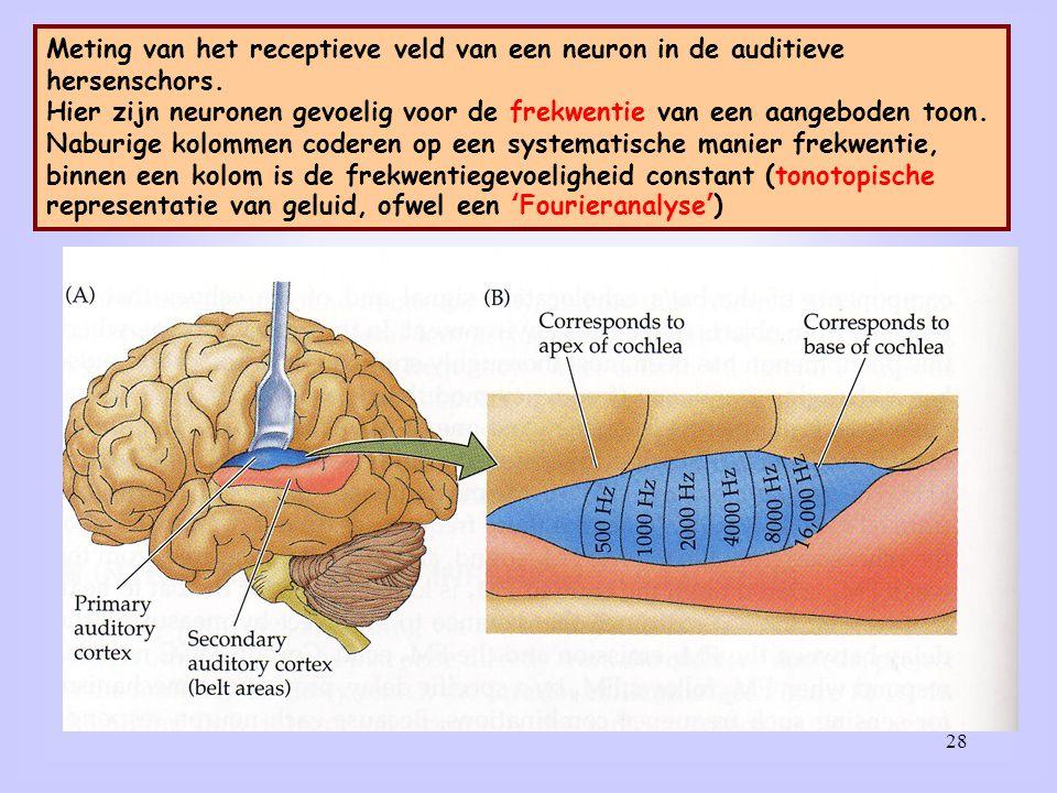 28 Meting van het receptieve veld van een neuron in de auditieve hersenschors. Hier zijn neuronen gevoelig voor de frekwentie van een aangeboden toon.