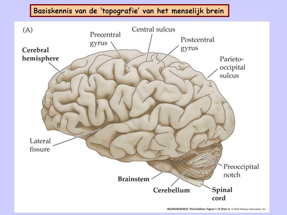 2 Basiskennis van de 'topografie' van het menselijk brein