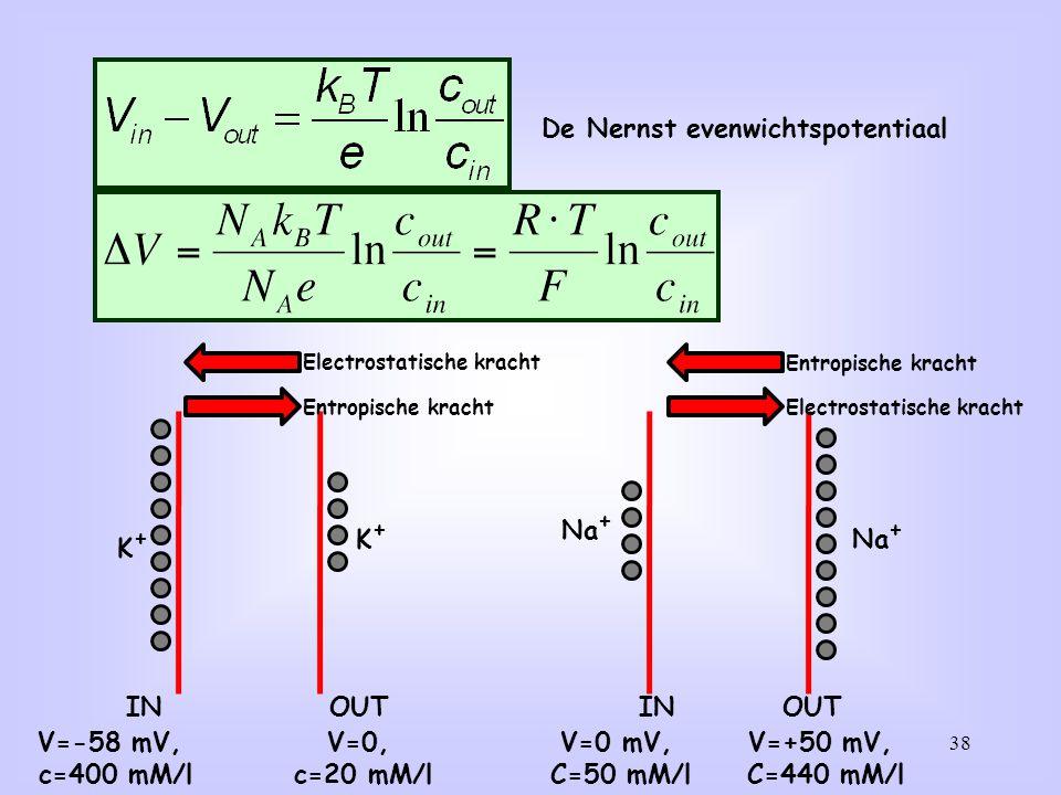 38 De Nernst evenwichtspotentiaal INOUT V=0, c=20 mM/l V=-58 mV, c=400 mM/l K+K+ K+K+ INOUT V=+50 mV, C=440 mM/l V=0 mV, C=50 mM/l Na + Electrostatisc