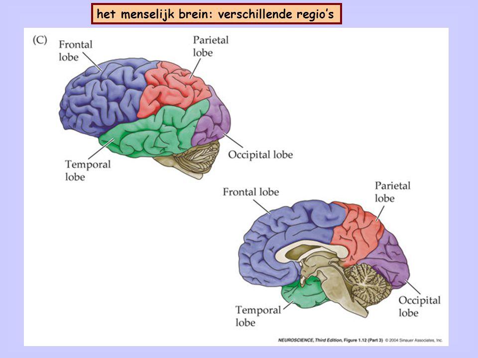 4 Coördinaten in relatie tot het menselijk brein