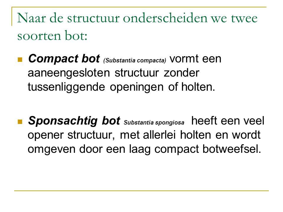 Naar de structuur onderscheiden we twee soorten bot: Compact bot (Substantia compacta) vormt een aaneengesloten structuur zonder tussenliggende openin