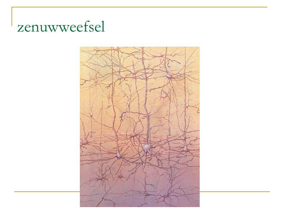 zenuwweefsel