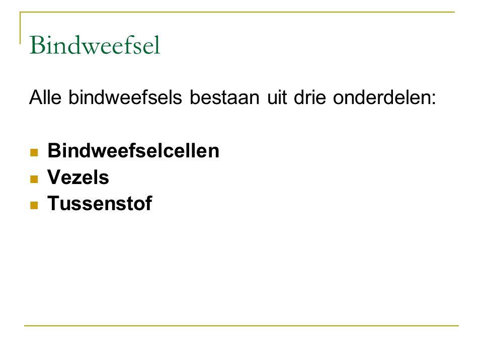 Bindweefsel Alle bindweefsels bestaan uit drie onderdelen: Bindweefselcellen Vezels Tussenstof