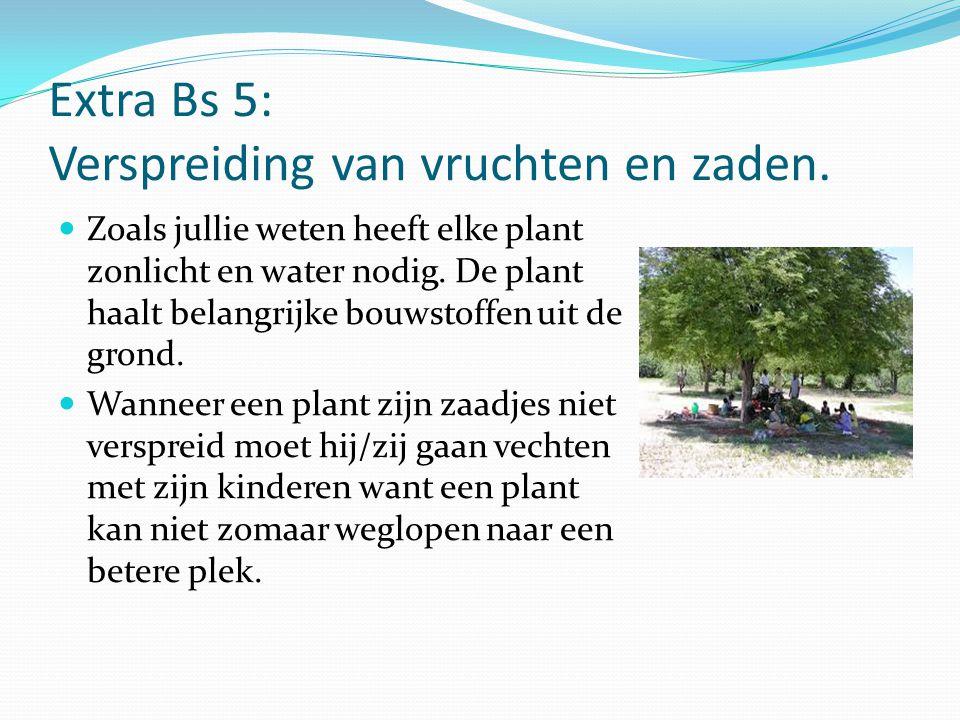Extra Bs 5: Verspreiding van vruchten en zaden. Zoals jullie weten heeft elke plant zonlicht en water nodig. De plant haalt belangrijke bouwstoffen ui