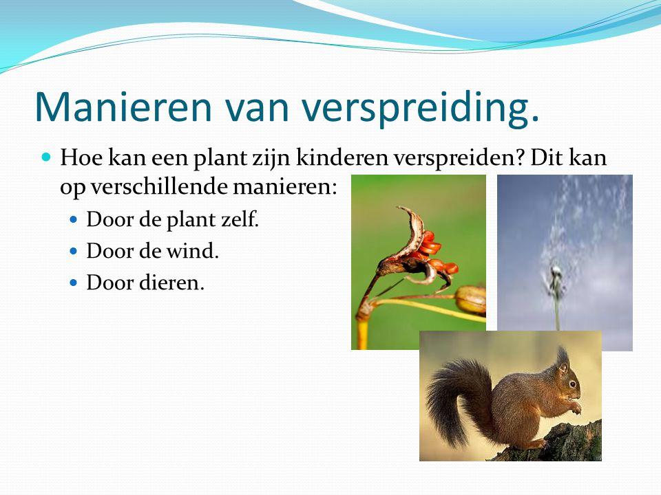 Manieren van verspreiding. Hoe kan een plant zijn kinderen verspreiden? Dit kan op verschillende manieren: Door de plant zelf. Door de wind. Door dier