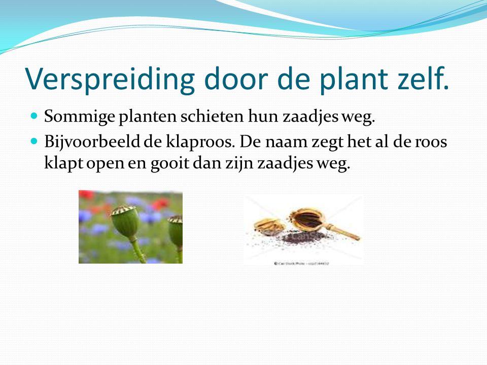 Verspreiding door de plant zelf. Sommige planten schieten hun zaadjes weg. Bijvoorbeeld de klaproos. De naam zegt het al de roos klapt open en gooit d