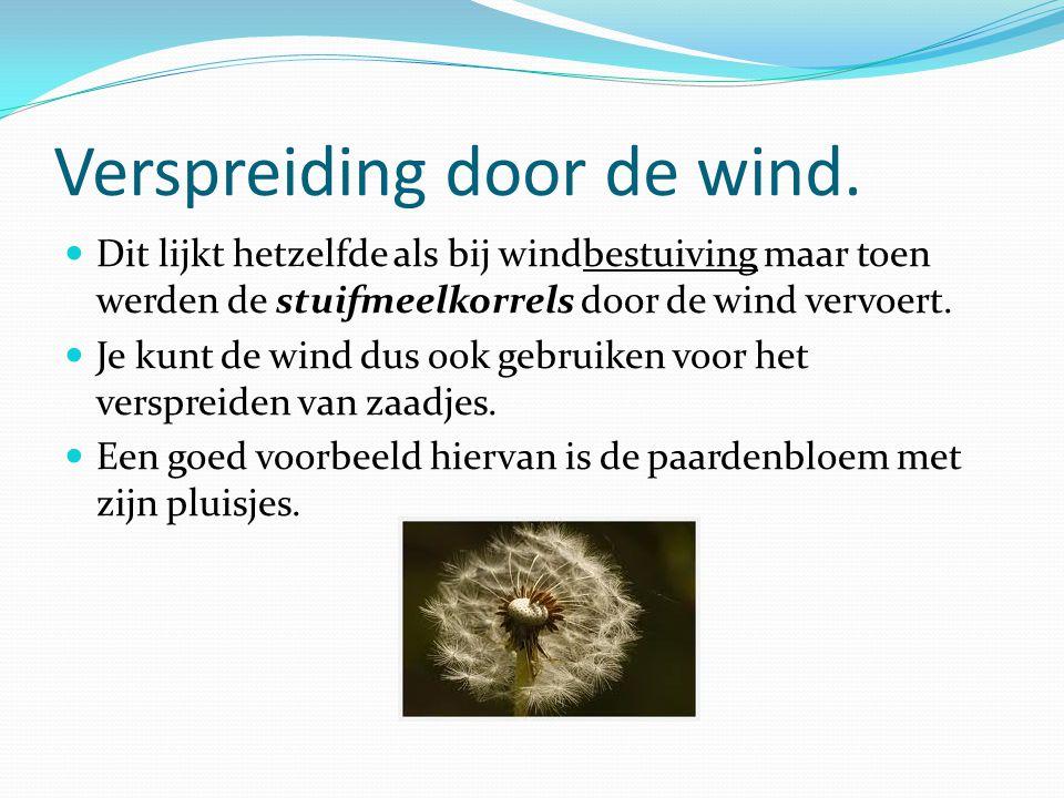Verspreiding door de wind. Dit lijkt hetzelfde als bij windbestuiving maar toen werden de stuifmeelkorrels door de wind vervoert. Je kunt de wind dus