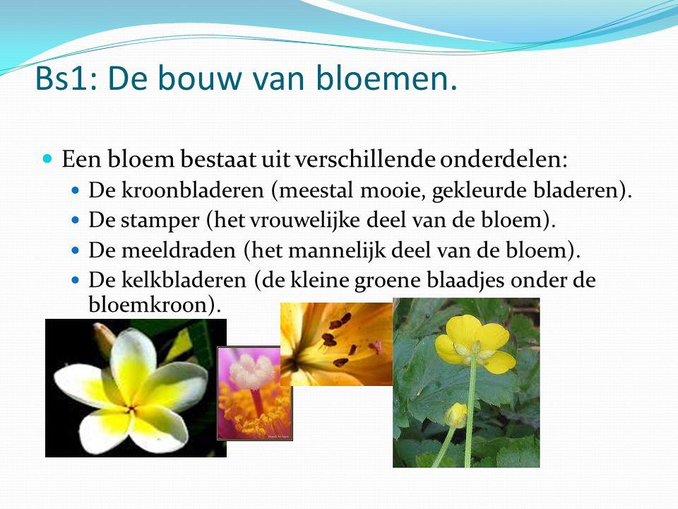 Bs1: De bouw van bloemen. Een bloem bestaat uit verschillende onderdelen: De kroonbladeren (meestal mooie, gekleurde bladeren). De stamper (het vrouwe