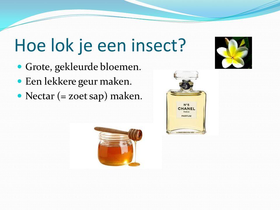 Hoe lok je een insect? Grote, gekleurde bloemen. Een lekkere geur maken. Nectar (= zoet sap) maken.