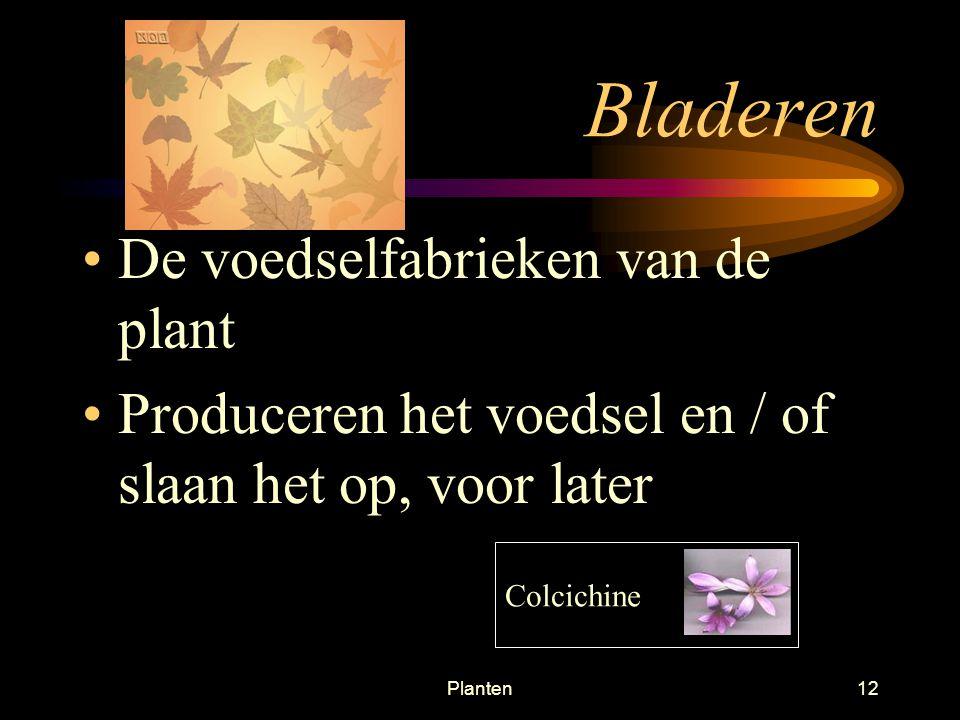 Planten11