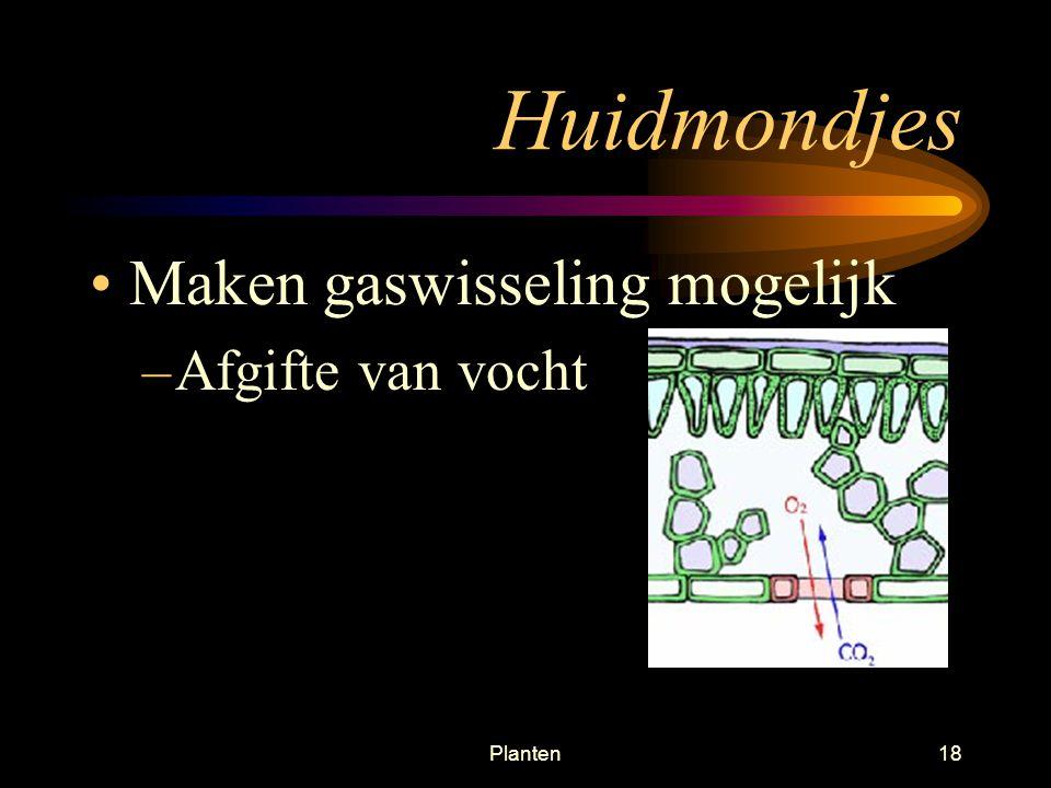 Planten17 Sluitcellen Meer chlorofyl dan in omringende epidermiscellen FS = glucose = osmotische waarde = zwellen = sluiten Turgor van deze sluitcellen is van belang