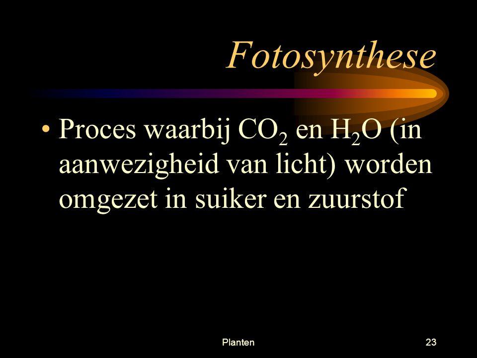 Planten22 Chloroplasten Bevatten chlorophyl inGelokaliseerd in de voedselproducerende cellen