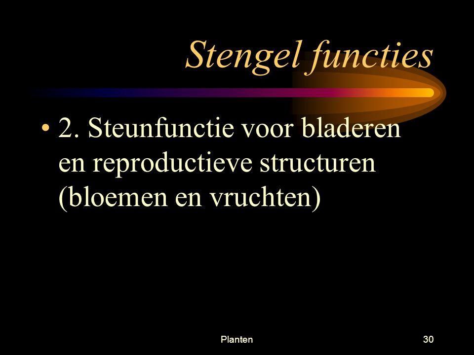 Planten29 Stengels Twee hoofdfuncties –1.Verplaatsen van water en mineralen van wortel naar boven en verplaatsen van glucose naar beneden