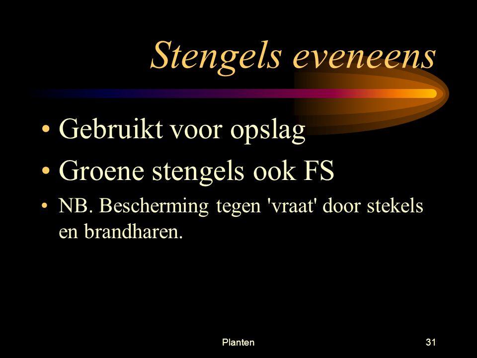 Planten30 Stengel functies 2.