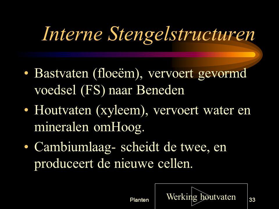 Planten32 Externe stengelstructuren Lenticellen (=kurkporiën) - adem poriën Vormen verbinding van buiten naar binnen achtereenvolgens: Lenticel, mergstraal, mergparenchym