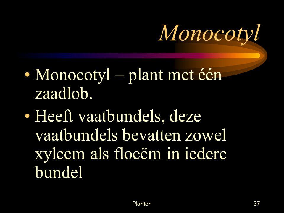 Planten36 Mono en dicotylen Grassen Lelies Orchideën Palmen Eik Bonen Spinazie Rozen