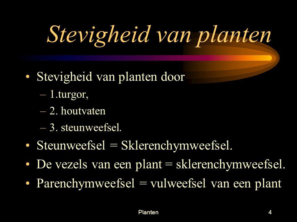 Planten34 Interne stengelstructuren Dicotylen, plant met twee zaadlobben Monocotylen plant met één zaadlob Type is in de stengel te zien