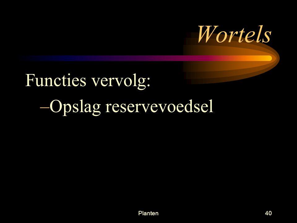 Planten39 Wortels Meestal ondergronds Functies: –Verankeren van de plant –Absorberen water en mineralen vanuit de bodem naar stengel toe Opname water wortel