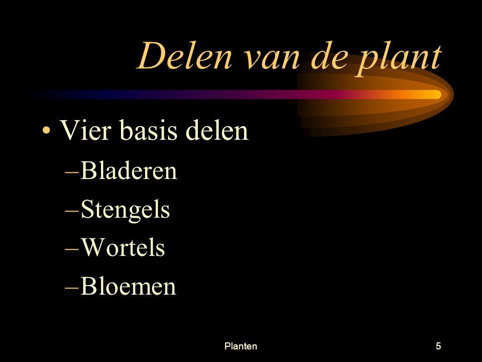 Planten5 Delen van de plant Vier basis delen –Bladeren –Stengels –Wortels –Bloemen