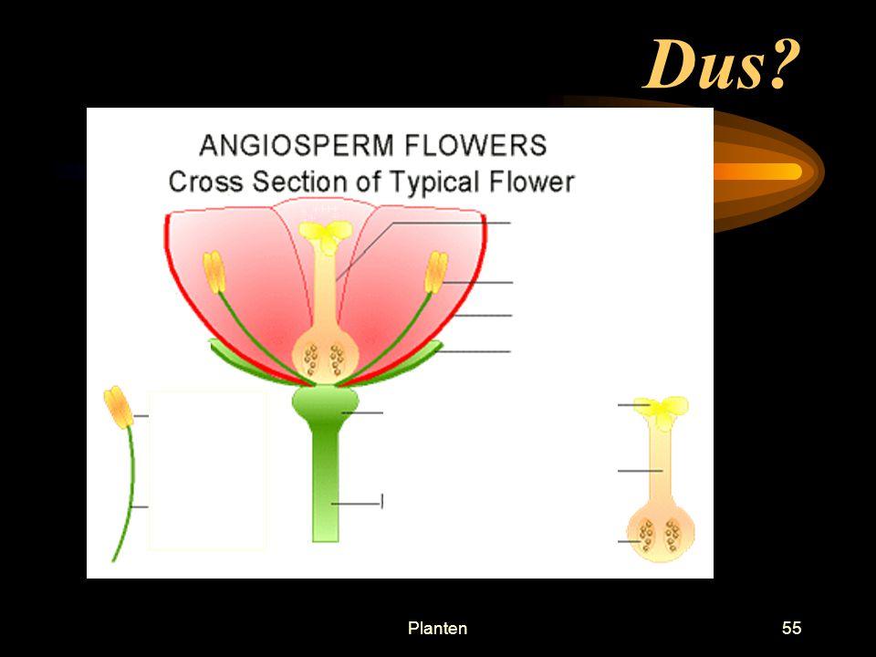Planten54 Vruchtbeginsel Eicel ontwikkelt zich hierin tot zaad Groeit uit tot vrucht of tot zaadbedekking