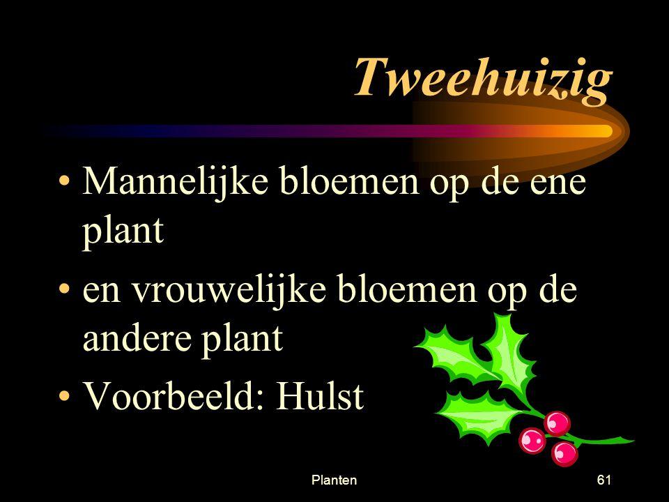 Planten60 Eenhuizig –Plant heeft aparte vrouwelijke bloemen en aparte mannelijke bloemen voorbeeld: grassen