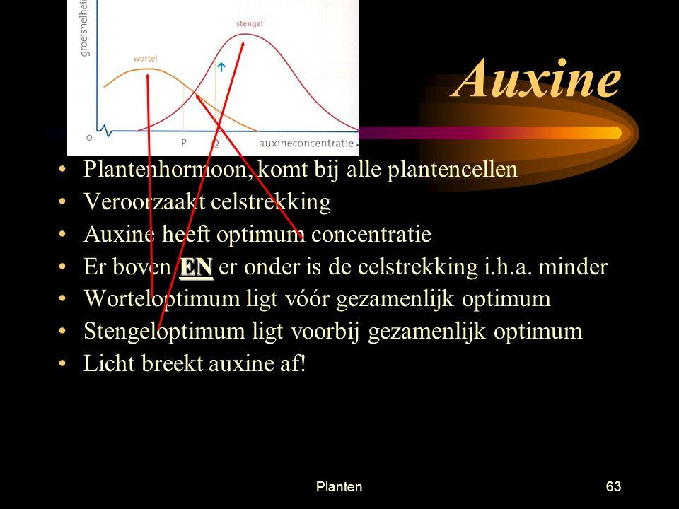 Planten62 Einde van deze presentatie