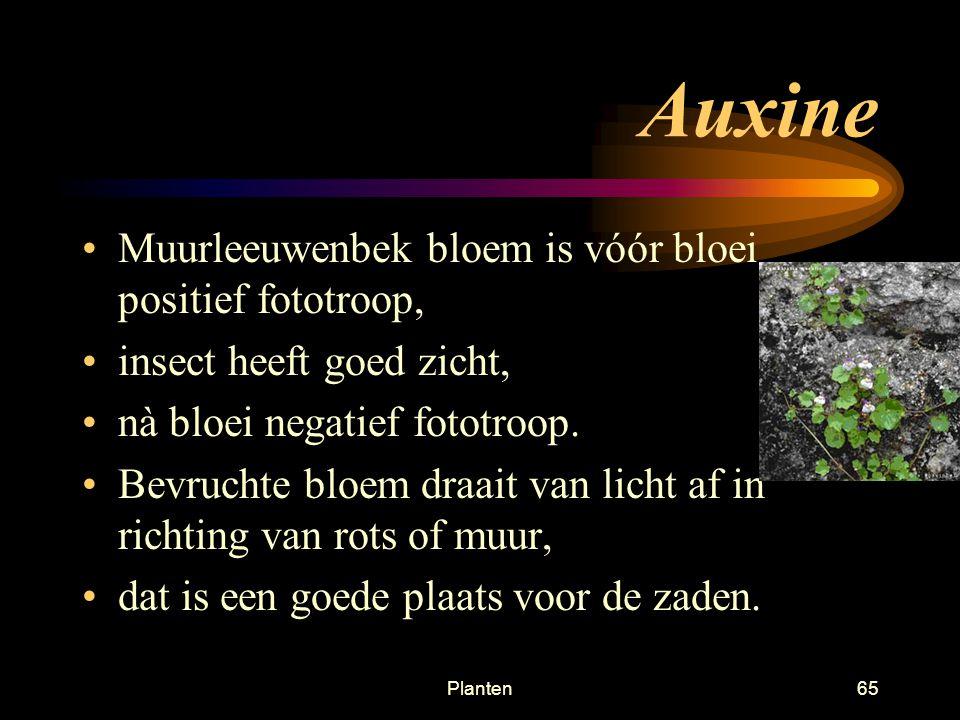 Planten64 Auxine Aan lichtzijde dan dus minder auxine, = minder celstrekking, = naar licht toebuigen Tropie is beweging van een plant, richting van beweging bepaald door de richting van waaruit een factor de grootste intensiteit uitoefend Fototropie, chemotropie, geotropie, tigmotropie (aanraking, klimop draaien) Door auxine te verplaatsen kunnen bladeren in optimale FS stand komen