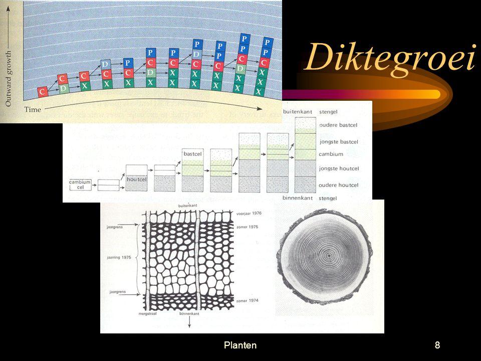 Planten68 Colchicine Medicament tegen jicht, herftsstijlroos (herfstkrokus) Voorkomt vorming van spoeldraden bij de celdeling Meerdere chromosomen in de cellen; polyploïdie Meer opbrengst