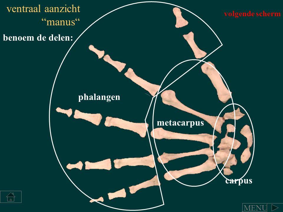 """carpus metacarpus phalangen benoem de delen: ventraal aanzicht """"manus"""" volgende scherm MENU"""